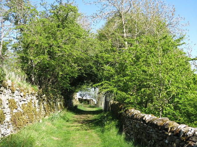 Bridleway above Gossipgate (3)