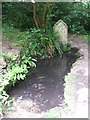 ST7467 : St Mary's Well, Charlcombe by Neil Owen