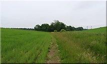 NO3601 : Path to Myreside Pond by Bill Kasman