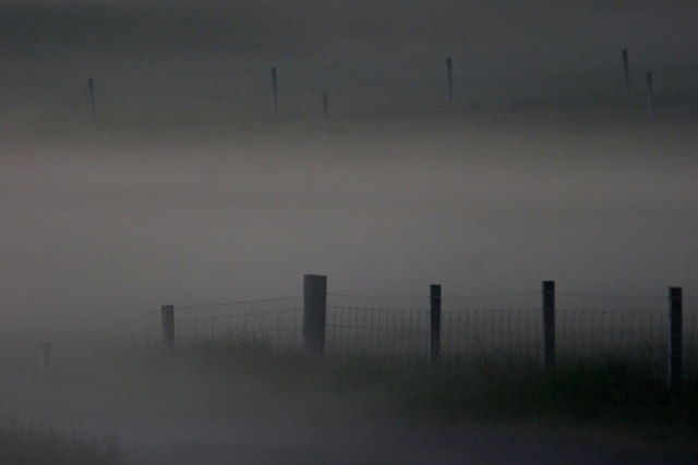 Fence posts in Daala mist, Baliasta