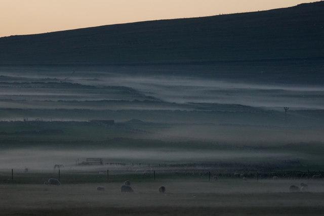 Sheep in daala mist, Baltasound