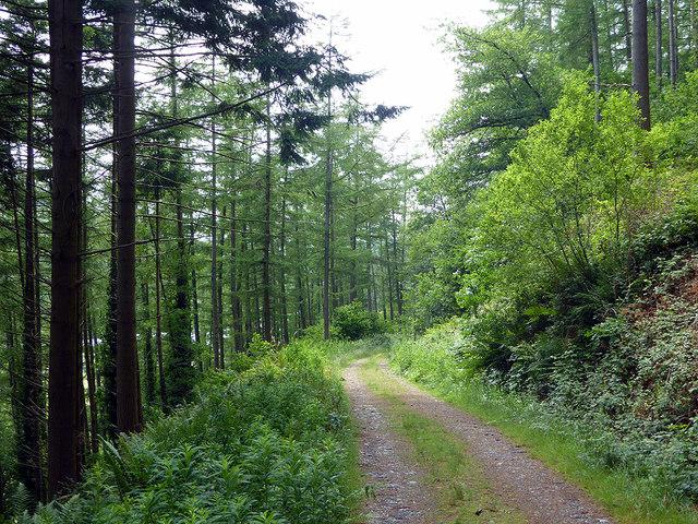 Track in Coed Dol-fawr