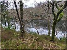 SH6441 : Looking through the trees to Llyn Hafod-y-llyn (Reservoir) by David Medcalf