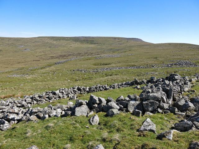 Ruined sheepfold at Raehow End