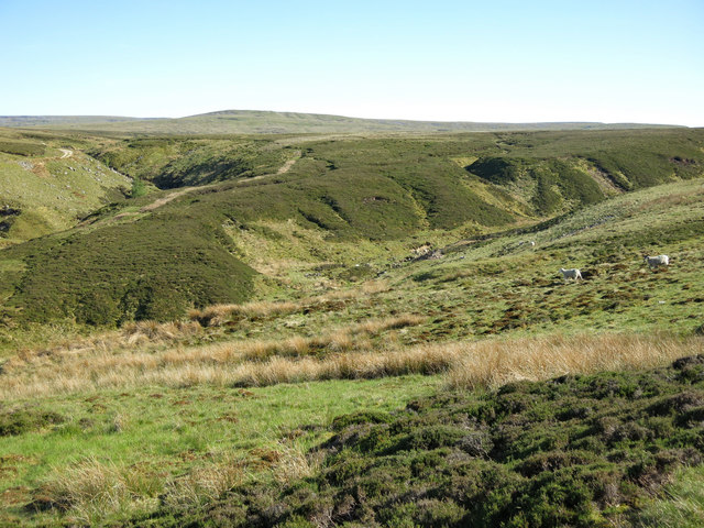 The cleugh of Gale Sike at Smittergill Head