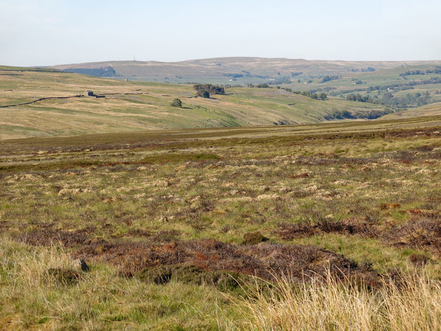 Moorland between Aglionby Beck and Shield Water