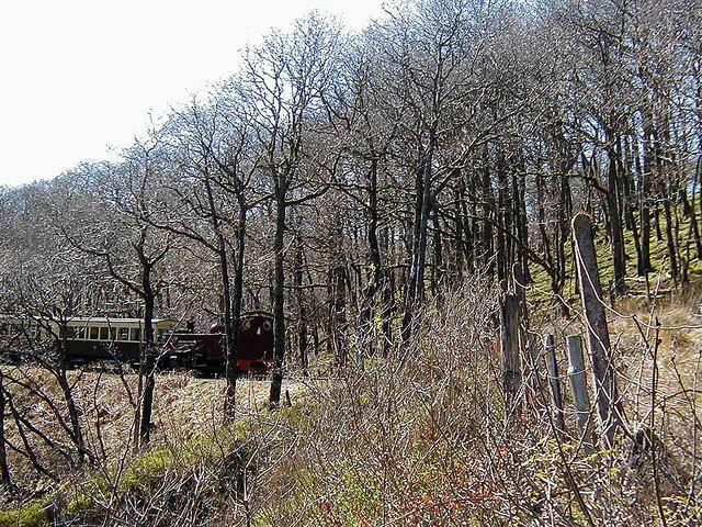 A vale of Rheidol train glimpsed through the trees