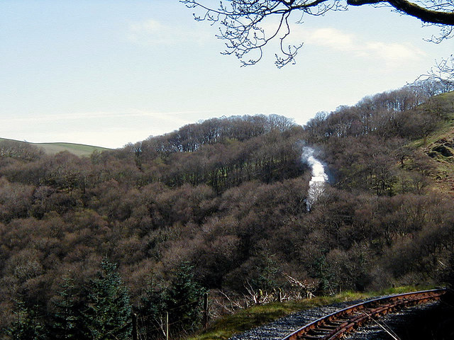 Steam in the trees at Derwen