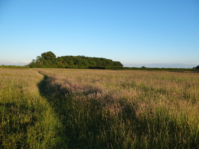 Footpath towards Little Plantation