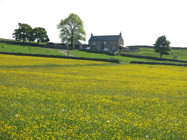 Buttercup meadow east of Leadside Bank