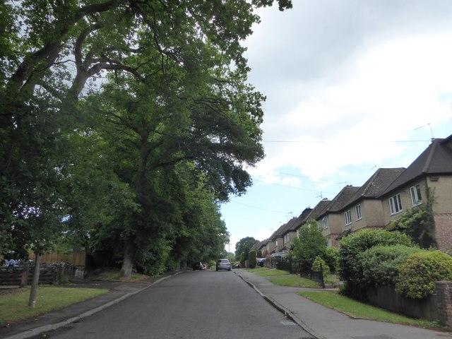 Looking eastwards along Sunvale Avenue