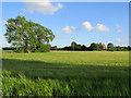 TL4861 : Scaffolding round Biggin Abbey by John Sutton
