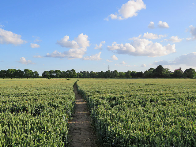 Footpath through wheat near Biggin Abbey