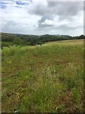 SX8460 : View from the Totnes Road by jeff collins