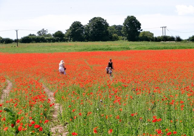 Admiring the poppies