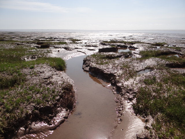 Saltmarsh meets seashore