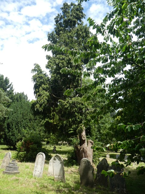 Trees and gravestones in Exeter Higher Cemetery