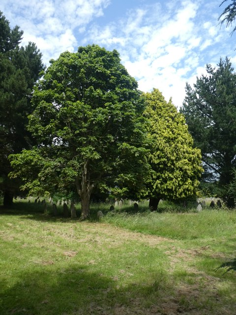 Shades of green on trees in Exeter Higher Cemetery