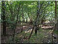 TF0820 : In sunlit grove by Bob Harvey