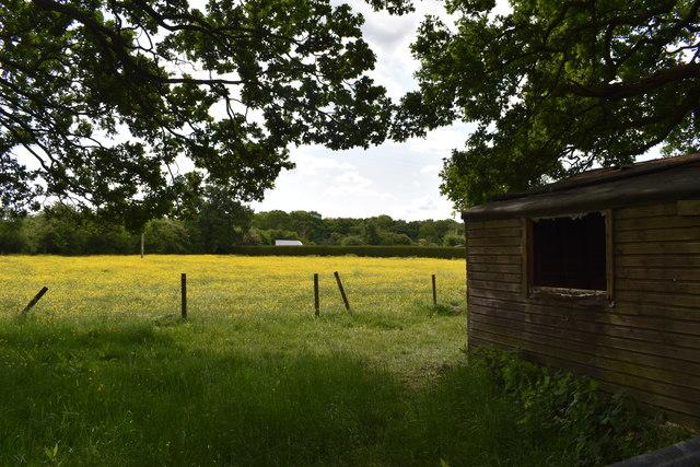 Buttercup meadow on Dunt Avenue
