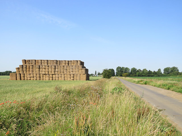 Bales by Long Drove