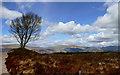 NN1574 : Lone birch by the Allt a'Mhuilinn path by Andy Waddington