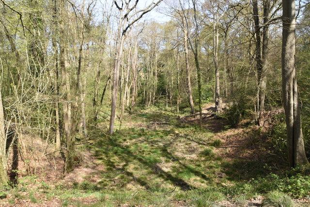 Gregg's Wood by N Chadwick