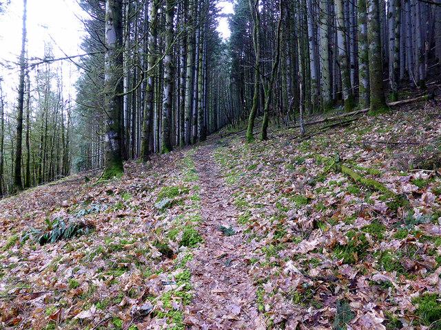 Path ascending through Coed Rheidol