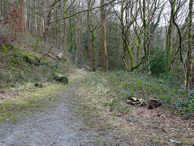 At the end of the forest road in Coed Dol-fawr
