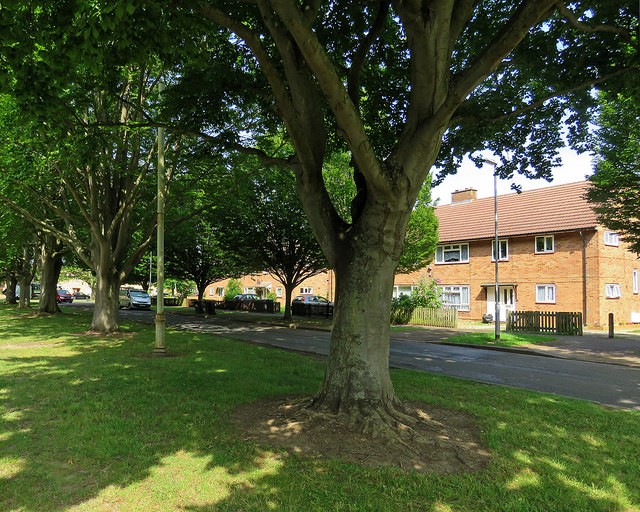 Barnwell: Rayson Way and a stench pipe