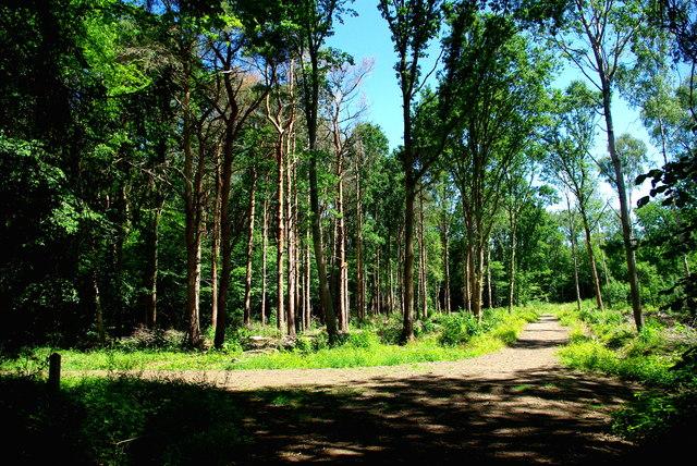 Restored woodland in Gamlingay Wood
