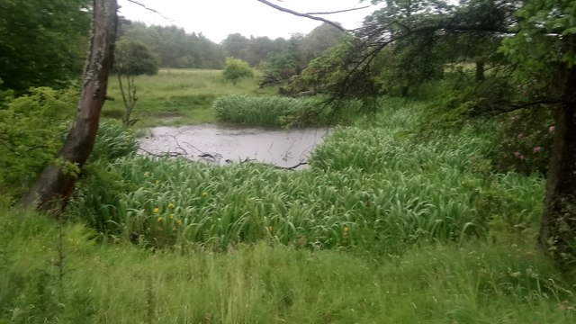 Small Pond at Site of Disused  Hermand Quarry