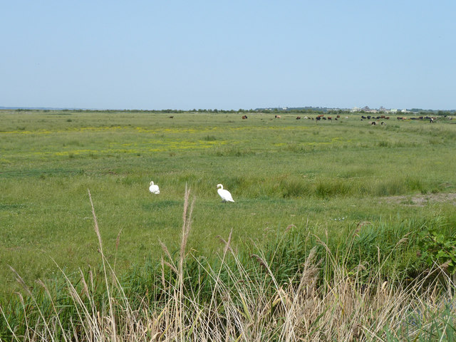 Eastcourt and Shorne Marshes