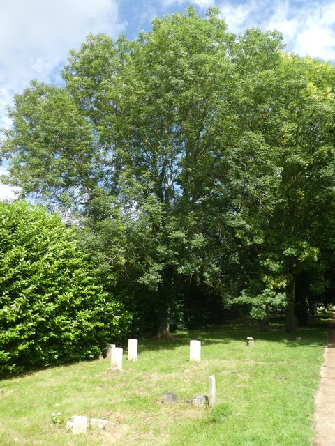 The hedge on the north boundary, Exeter Higher Cemetery
