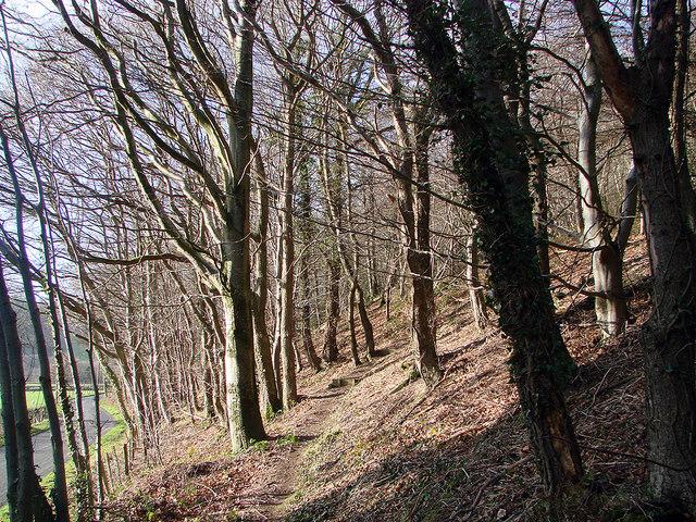 Starting the climb through Pant Da Woods