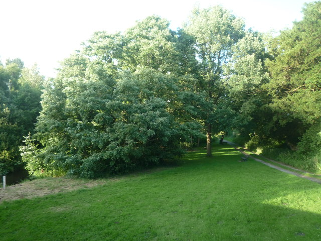 Trees by Pembridge Bridge