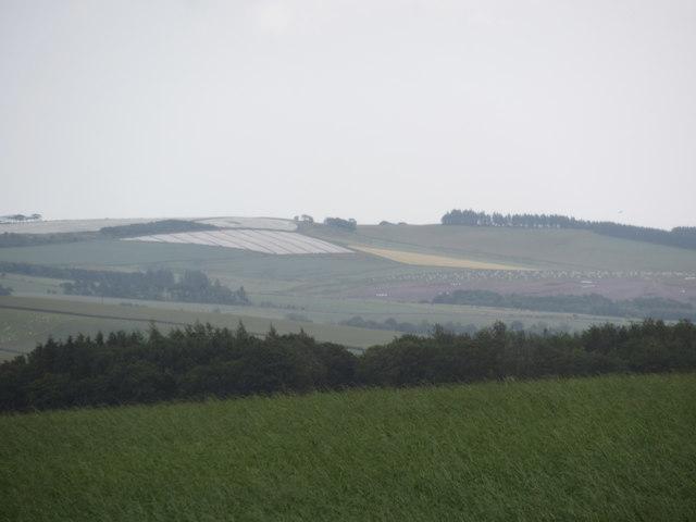 Fleece-covered crop on Dalks Law near Grantshouse in The Scottish Borders