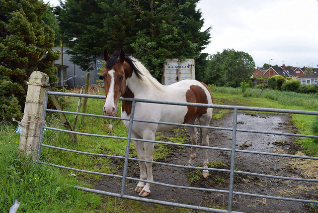 A quiet horse, Mullaghmore