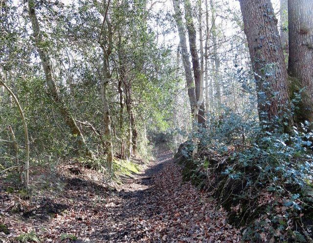 Sunken lane in the woods