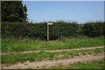 SE7843 : Fingerpost near Gale Carr Farm by Ian S