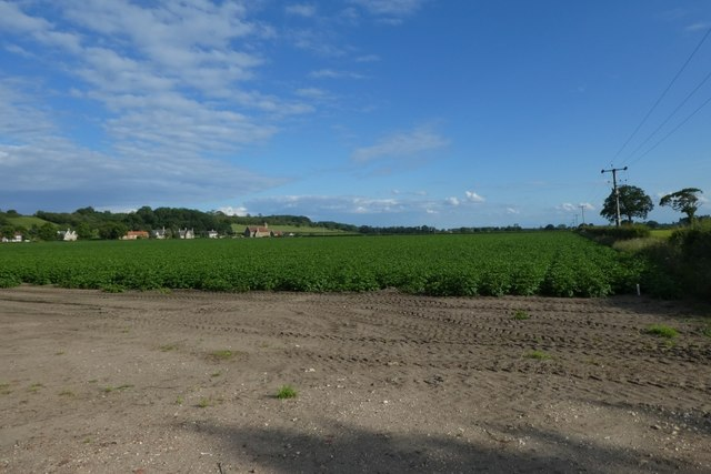 Potato fields near North Cliffe