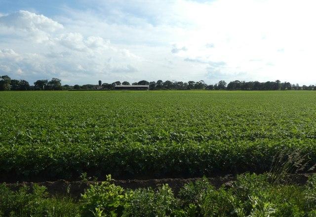 Farmland beside Cliffe Lane