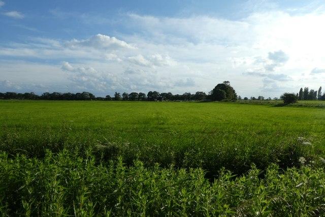 Fields beside Cliffe Lane