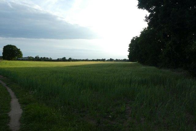 Farmland from Gipsey Corner