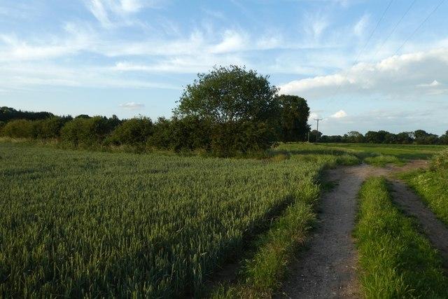 Bridleway to Elvington Lane