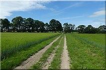 SE6757 : Bridleway over Sand Hutton Common by DS Pugh