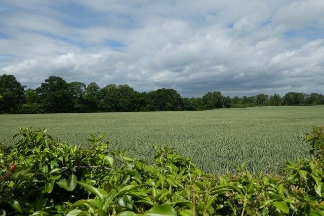 Fields near Kirkham