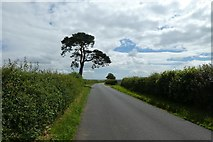 SE7466 : Road between Kirkham and Firby by DS Pugh
