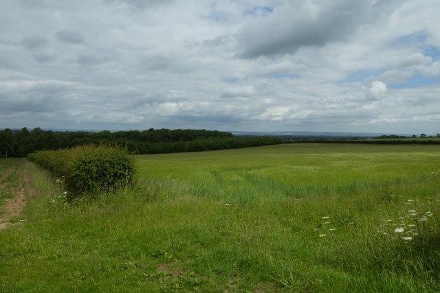 Farmland beside Menethorpe Lane