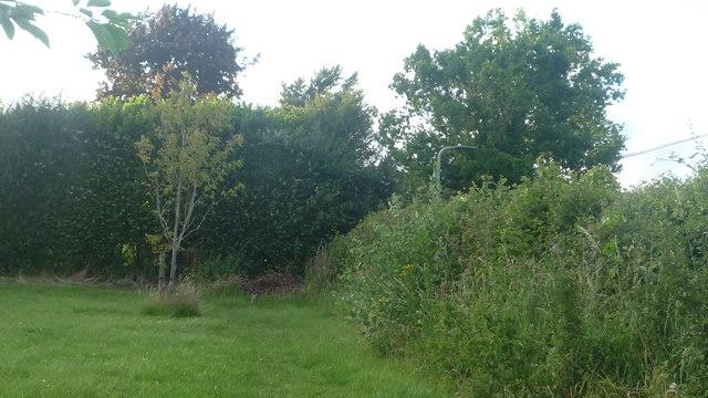 Grassland at Pembridge Village Hall